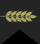 Portrait de grainesdeweb